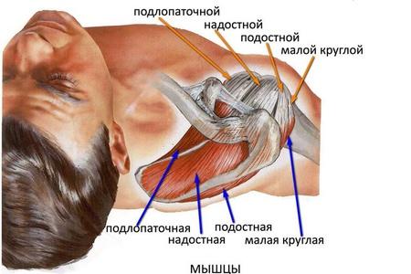 Плечевой сустав мышцы лечение антидепрессанты при болях в суставах